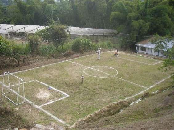 Zonas verdes para realizar actividades