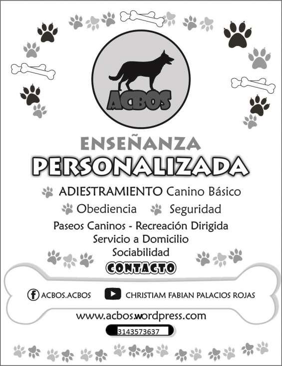 Enseñanza personalizada y paseos para caninos