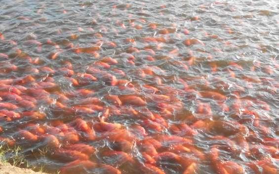 La opción ideal si buscas invertir en acuicultura